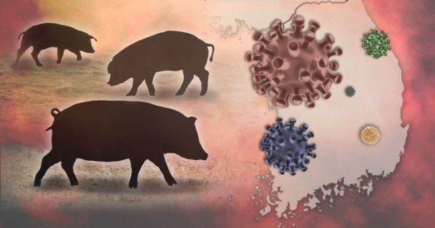 S. Korea further ups guard against ASF as cases from wild boars continue to swell