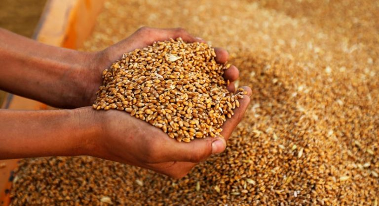PHL wheat import outlook cut on weak animal feed demand