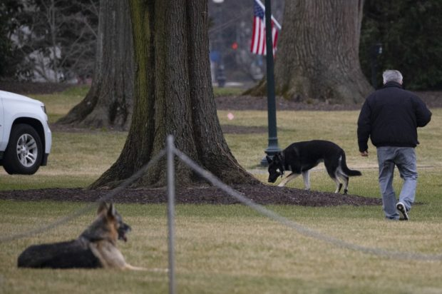 From the White House to the dog house: Biden's pooches sent home after 'biting incident'